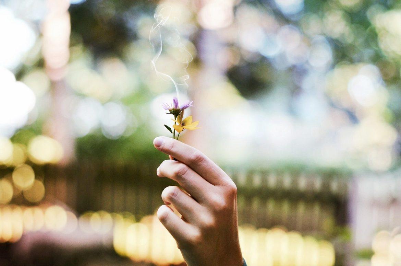 Pflanze, Rauch